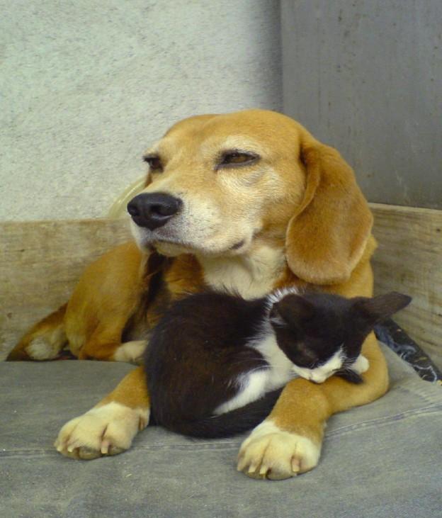 Pet Sitting / House Sitting Tips