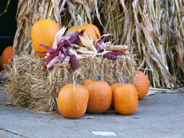 Indian corn, pumpkins, corn stalks and bales of hay make perfect Autumn Decorations