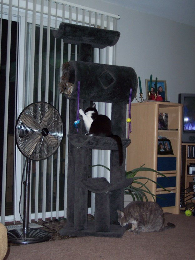 Cats Playing on the Cat Tower