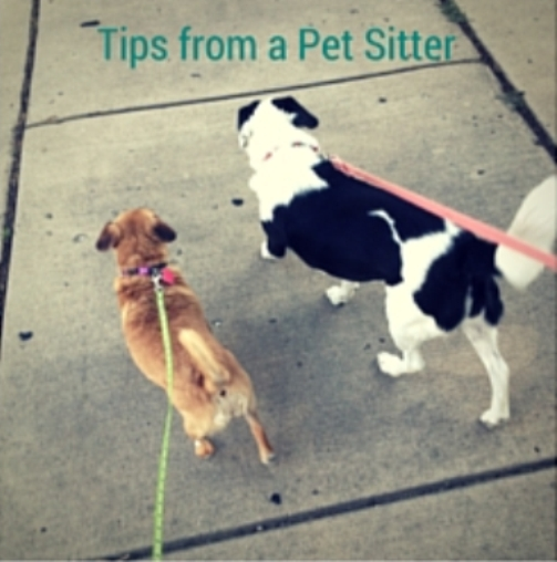 Tips from a Pet Sitter